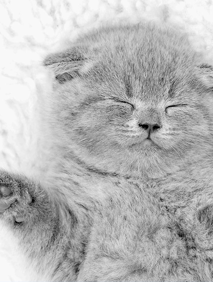 Cat-Content zum wirklich Streicheln.
