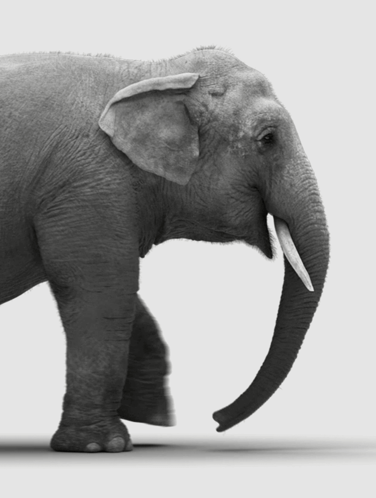 Flexibel statt wie ein Elefant.
